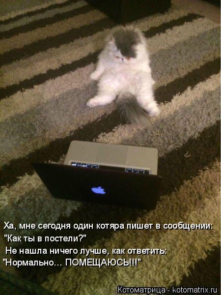 """Котоматрица: Ха, мне сегодня один котяра пишет в сообщении: """"Как ты в постели?"""" Не нашла ничего лучше, как ответить:  """"Нормально… ПОМЕЩАЮСЬ!!!"""""""