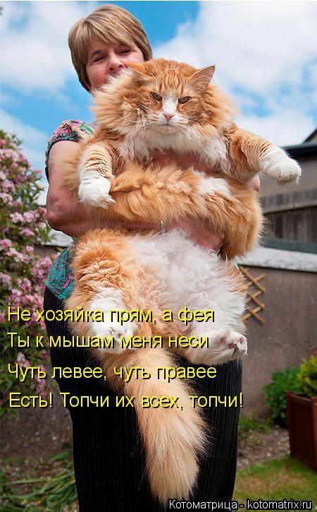 Котоматрица: Не хозяйка прям, а фея   Ты к мышам меня неси Чуть левее, чуть правее Есть! Топчи их всех, топчи!