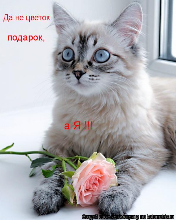 Котоматрица: а Я !!! Да не цветок  подарок,
