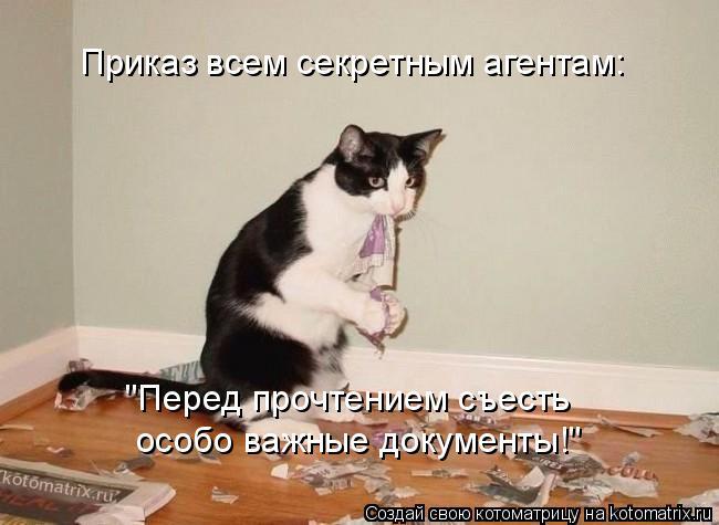 """Котоматрица: Приказ всем секретным агентам: """"Перед прочтением съесть  особо важные документы!"""""""