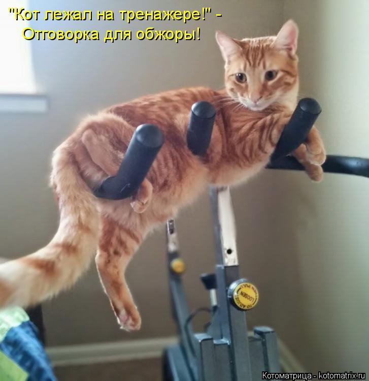 """Котоматрица: """"Кот лежал на тренажере!"""" - Отговорка для обжоры!"""