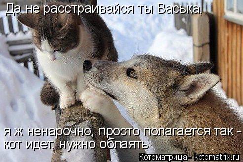 Котоматрица: Да не расстраивайся ты Васька, я ж ненарочно, просто полагается так - кот идет, нужно облаять