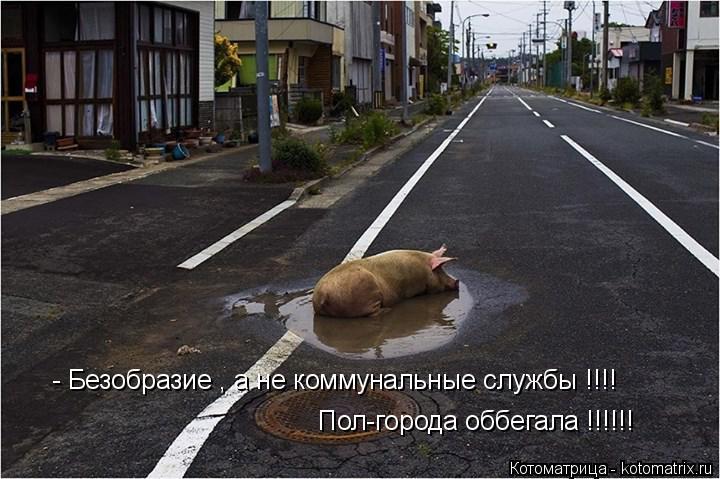 Котоматрица: - Безобразие , а не коммунальные службы !!!! Пол-города оббегала !!!!!!