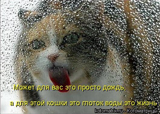 Котоматрица: Может для вас это просто дождь, а для этой кошки это глоток воды,это жизнь .