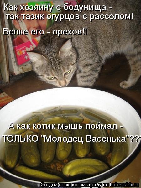 """Котоматрица: Как хозяину с бодунища -  так тазик огурцов с рассолом! ТОЛЬКО """"Молодец Васенька""""???!!!!!!!!! А как котик мышь поймал - Белке его - орехов!!"""
