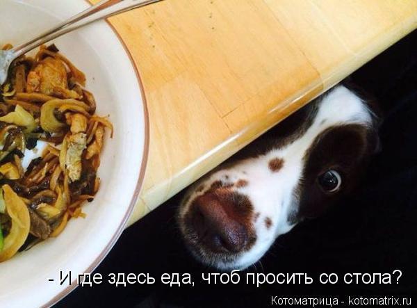 Котоматрица: - И где здесь еда, чтоб просить со стола?