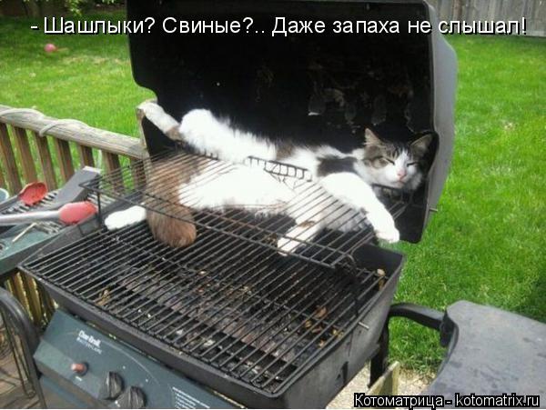 Котоматрица: - Шашлыки? Свиные?.. Даже запаха не слышал!