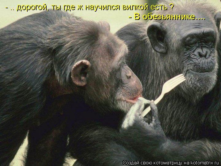Котоматрица: - .. дорогой, ты где ж научился вилкой есть ? - В обезьяннике....