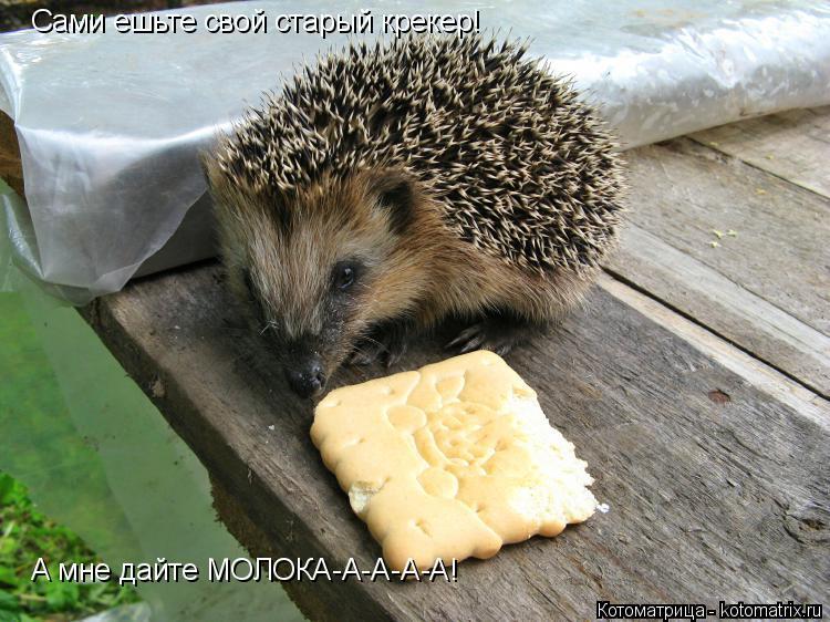 Котоматрица: Сами ешьте свой старый крекер!  А мне дайте МОЛОКА-А-А-А-А!