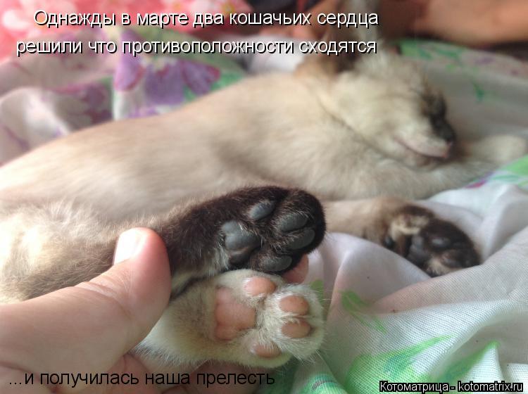 Котоматрица: Однажды в марте два кошачьих сердца решили что противоположности сходятся ...и получилась наша прелесть