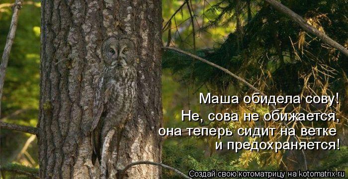 Котоматрица: Маша обидела сову! Не, сова не обижается,  она теперь сидит на ветке и предохраняется!
