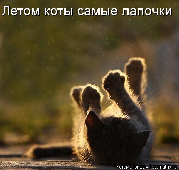 Котоматрица: Летом коты самые лапочки