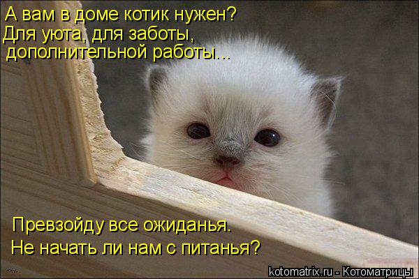 Котоматрица: дополнительной работы... А вам в доме котик нужен? Для уюта, для заботы,  Превзойду все ожиданья. Не начать ли нам с питанья?