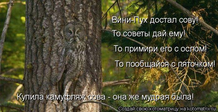 Котоматрица: Вини-Пух достал сову! То советы дай ему! То примири его с ослом! То пообщайся с пяточком! Купила камуфляж сова - она же мудрая была!