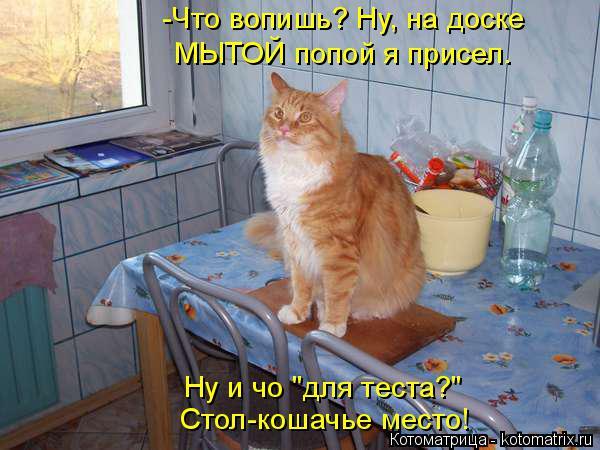 """Котоматрица: МЫТОЙ попой я присел. -Что вопишь? Ну, на доске Ну и чо """"для теста?"""" Стол-кошачье место!"""