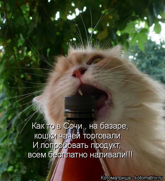Котоматрица: Как то в Сочи , на базаре, кошки чачей торговали. И попробовать продукт,  всем бесплатно наливали!!!