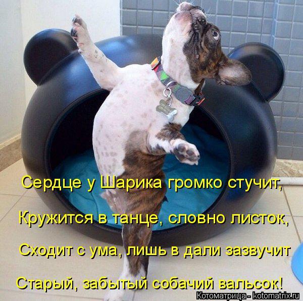 Котоматрица: Сердце у Шарика громко стучит, Кружится в танце, словно листок, Сходит с ума, лишь в дали зазвучит Старый, забытый собачий вальсок!