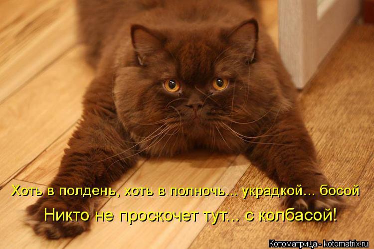 Котоматрица: Хоть в полдень, хоть в полночь... украдкой... босой  Никто не проскочет тут... с колбасой!