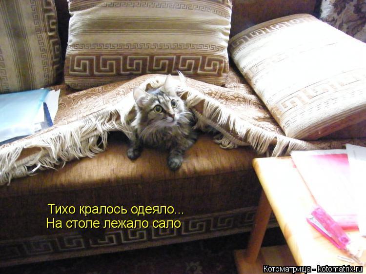 Котоматрица: Тихо кралось одеяло... На столе лежало сало