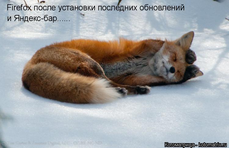 Котоматрица: Firefox после установки последних обновлений и Яндекс-бар......