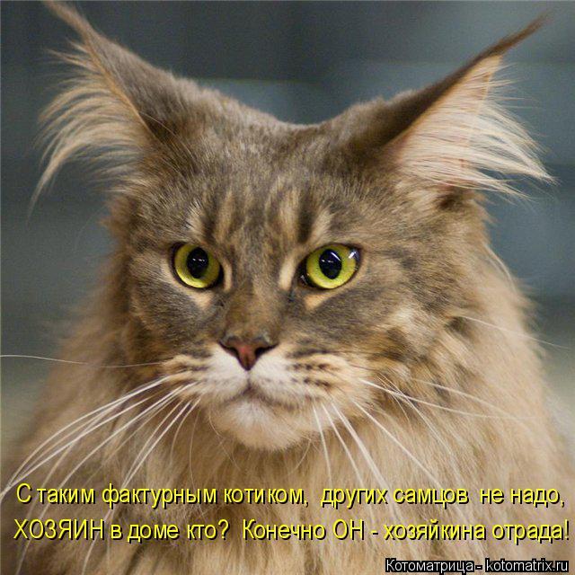 Котоматрица: С таким фактурным котиком,  других самцов  не надо,  ХОЗЯИН в доме кто?  Конечно ОН - хозяйкина отрада!