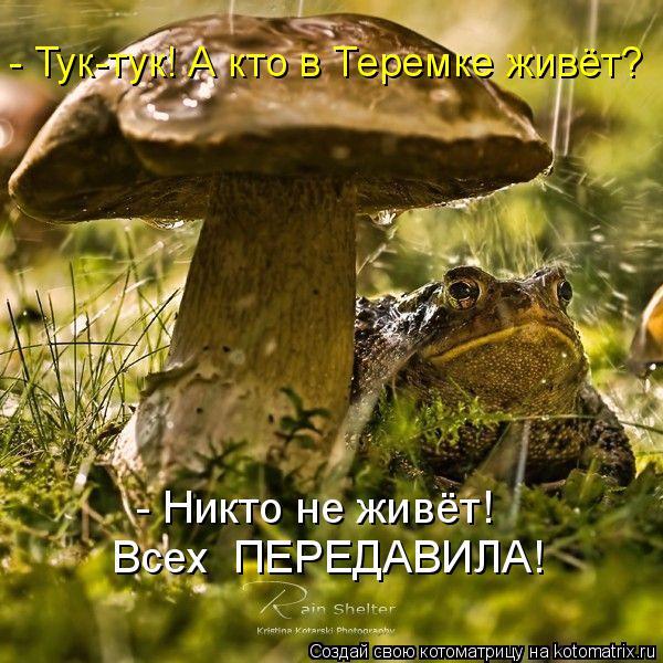 Котоматрица: - Никто не живёт!  Всех  ПЕРЕДАВИЛА! - Тук-тук! А кто в Теремке живёт?