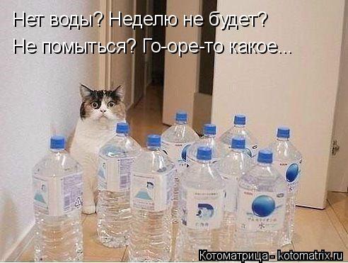 Котоматрица: Нет воды? Неделю не будет? Не помыться? Го-оре-то какое...
