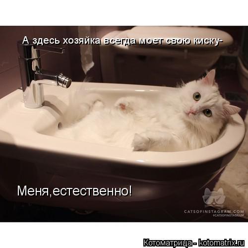 Котоматрица: А здесь хозяйка всегда моет свою киску- Меня,естественно!