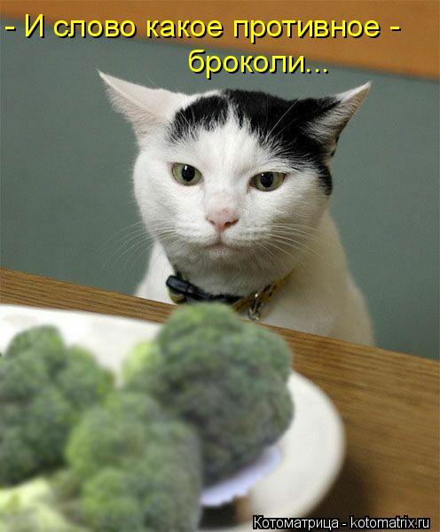 Котоматрица: - И слово какое противное -  броколи...