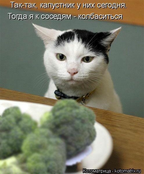 Котоматрица: Так-так, капустник у них сегодня. Тогда я к соседям - колбаситься