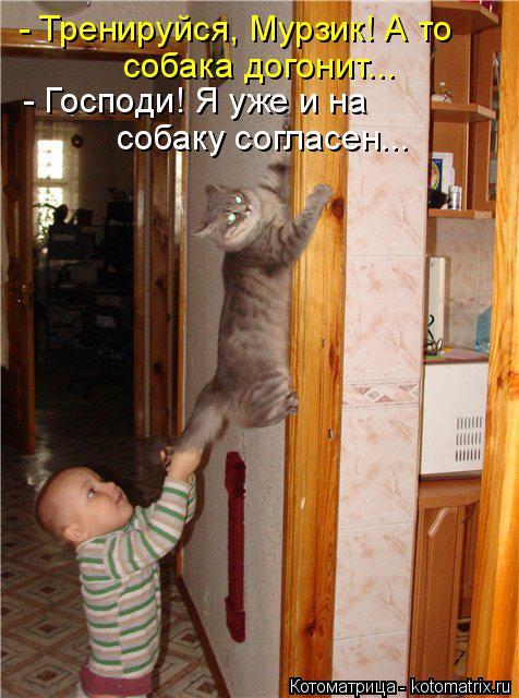 Котоматрица: - Тренируйся, Мурзик! А то собака догонит... - Господи! Я уже и на собаку согласен...