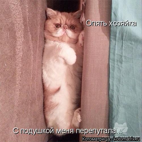 Котоматрица: Опять хозяйка  С подушкой меня перепутала...