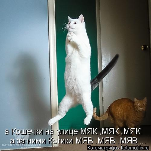 Котоматрица: а Кошечки на улице МЯК ,МЯК ,МЯК а за ними Котики МЯВ ,МЯВ ,МЯВ ...
