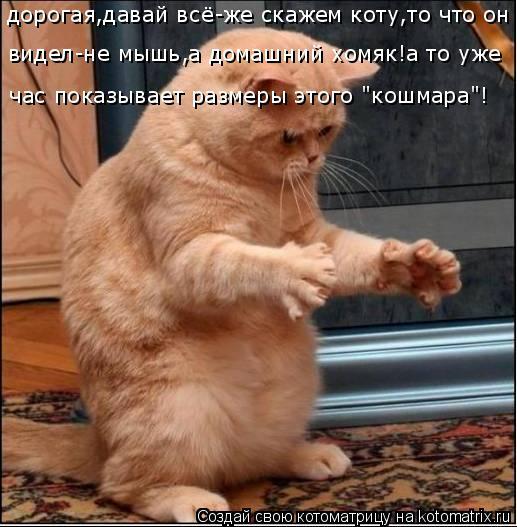 """Котоматрица: дорогая,давай всё-же скажем коту,то что он час показывает размеры этого """"кошмара""""! видел-не мышь,а домашний хомяк!а то уже"""