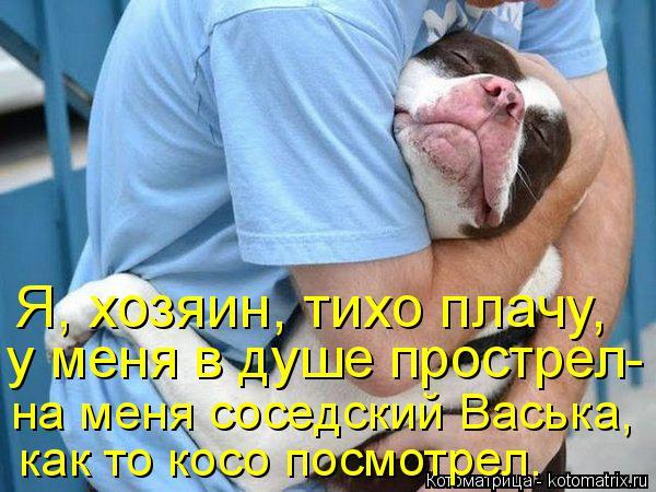 Котоматрица: Я, хозяин, тихо плачу, у меня в душе прострел- на меня соседский Васька, как то косо посмотрел.