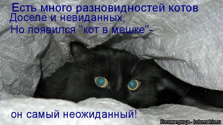 """Котоматрица: Есть много разновидностей котов Доселе и невиданных, Но появился """"кот в мешке""""- он самый неожиданный!"""