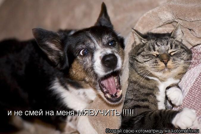 Котоматрица: и не смей на меня МЯВУЧИТЬ !!!!!