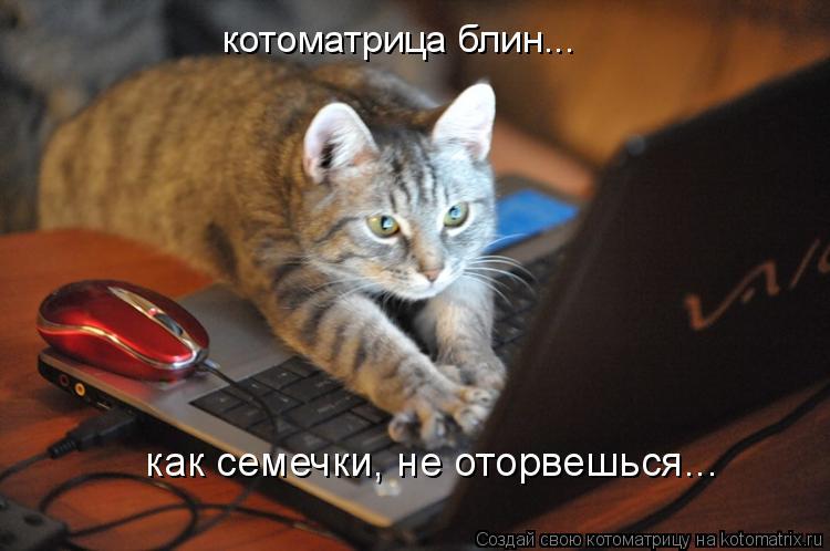 Котоматрица: котоматрица блин... как семечки, не оторвешься...