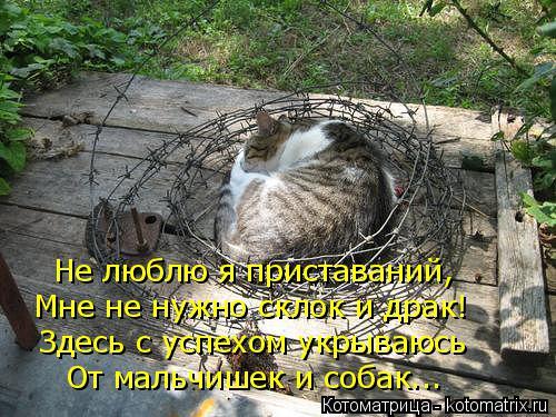 Котоматрица: Не люблю я приставаний, Мне не нужно склок и драк! Здесь с успехом укрываюсь От мальчишек и собак...