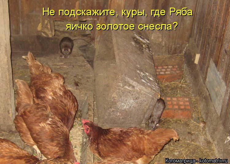 Котоматрица: Не подскажите, куры, где Ряба  яичко золотое снесла?