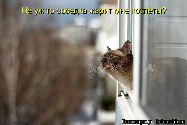 Котоматрица: Не уж то соседка жарит мне котлеты?