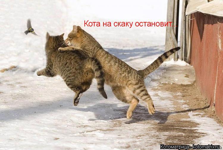 Котоматрица: Кота на скаку остановит...