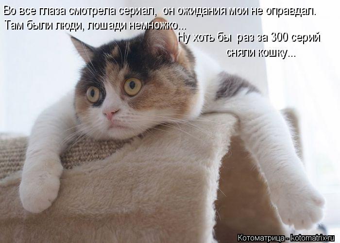 Котоматрица: Во все глаза смотрела сериал,  он ожидания мои не оправдал. Там были люди, лошади немножко... Ну хоть бы  раз за 300 серий  сняли кошку...