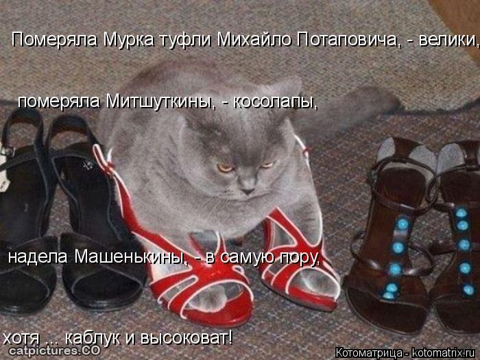 Котоматрица: Померяла Мурка туфли Михайло Потаповича, - велики,  померяла Митшуткины, - косолапы, надела Машенькины, - в самую пору, хотя ... каблук и высоко