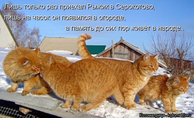 Котоматрица: Лишь только раз приехал Рыжик в Серокотово, лишь на часок он появился в огороде, а память до сих пор живёт в народе...