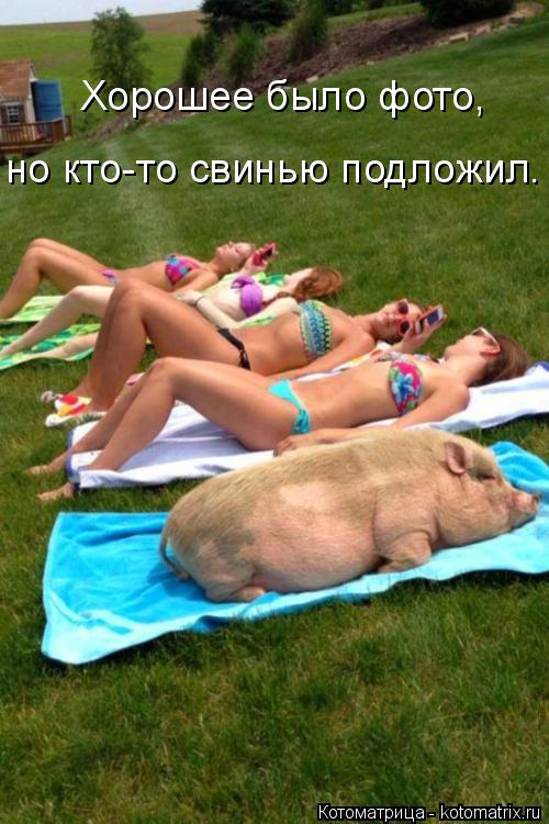 Котоматрица: Хорошее было фото,  но кто-то свинью подложил.