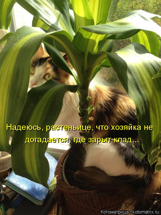 Котоматрица: Надеюсь, растеньице, что хозяйка не   догадается, где зарыт клад...