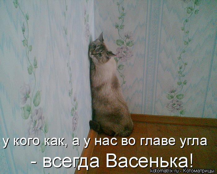 Котоматрица: у кого как, а у нас во главе угла  - всегда Васенька!