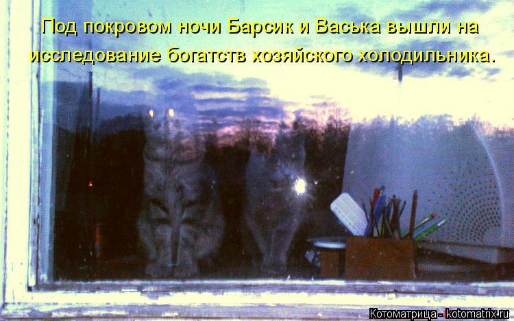 Котоматрица: Под покровом ночи Барсик и Васька вышли на  исследование богатств хозяйского холодильника.