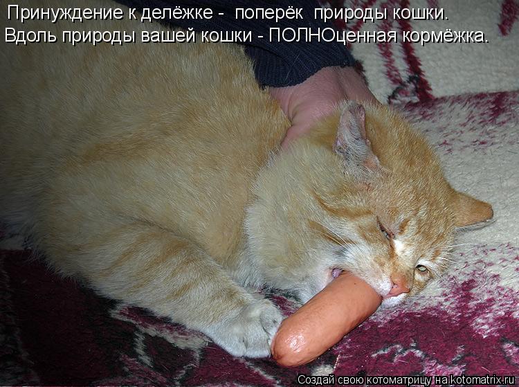 Котоматрица: Принуждение к делёжке -  поперёк  природы кошки. Вдоль природы вашей кошки - ПОЛНОценная кормёжка.